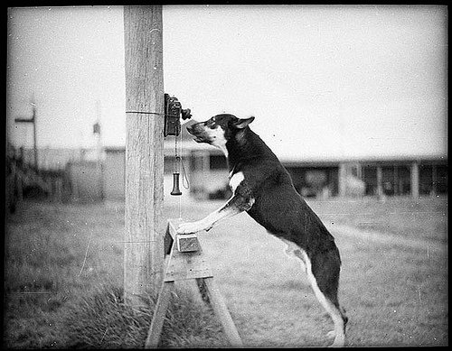 Police dog searching for answers, 1935, State Library of New South Wales (courtesy Flickr Commons)