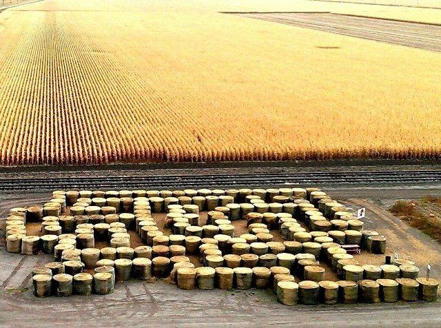 Autumn maze near Golden Spike Tower in North Platte, Nebraska (photo by Sheila Scarborough)