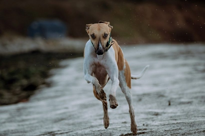 Ready to run if tourism recovers quickly dog running photo by Mitchell Orr on Unsplash