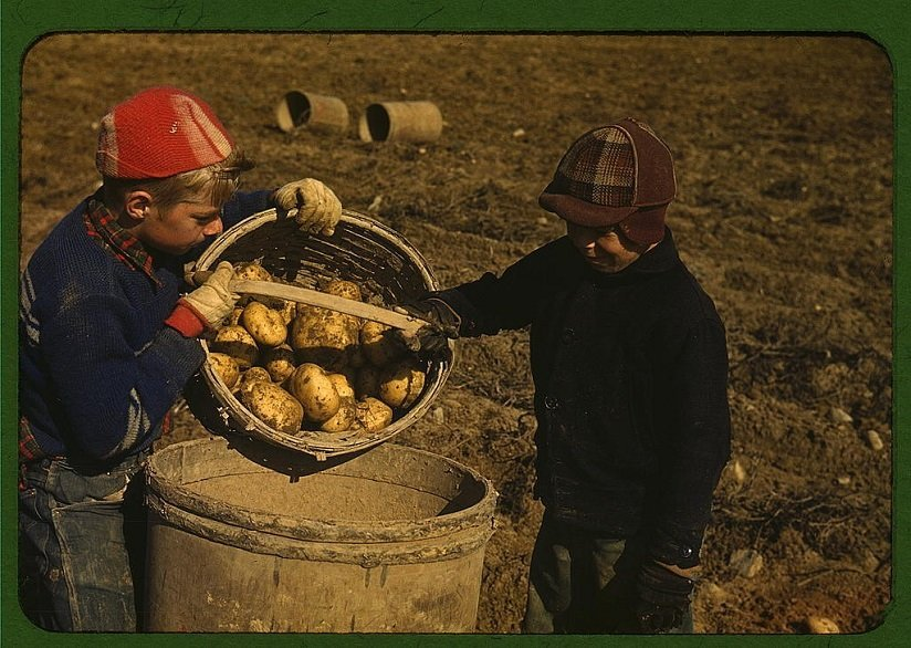 Content ideas like this of children gathering potatoes in a basket northern Maine circa 1939 courtesy Library of Congress on Flickr Commons